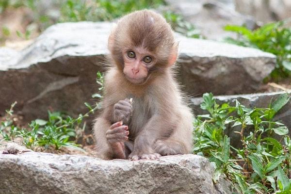 обезьяний парк Джигокудани