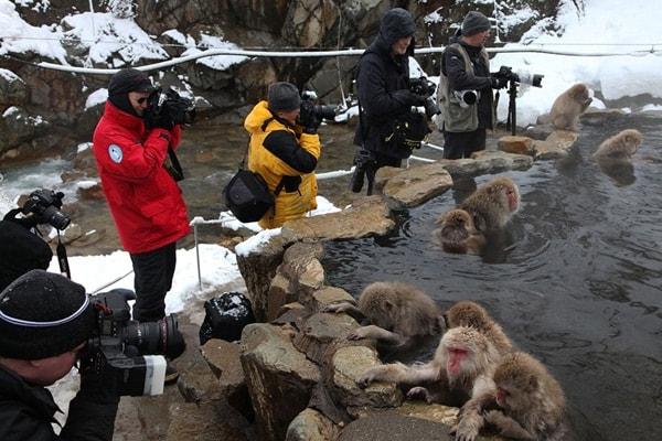 Фото обезьян правила съемки