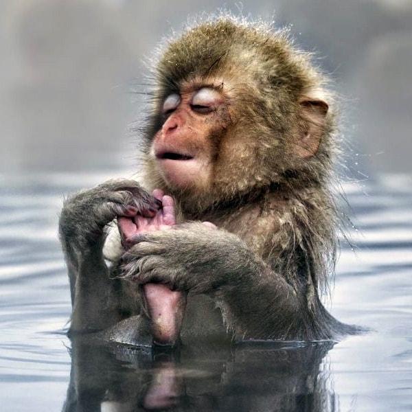 фото обезьян джигокудани